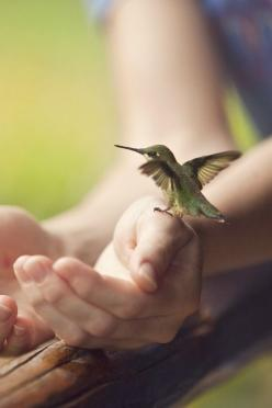 awww, hand held hummingbird.... how neat!: Animals, Humming Birds, Nature, Hands, Humming-Bird, Beautiful, Photography, Black, Hummingbirds