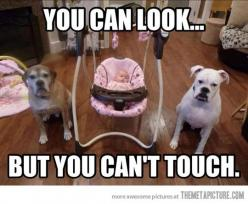 awww <3: Funny Animals, Pet, Funny Stuff, Humor, Guard Dogs, Funnies, Baby