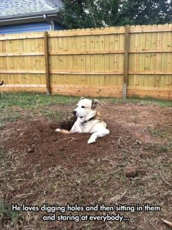 Awwww: Animals, Funny Dogs, Pet, Funny Picture, Funnies, Dig Holes, Funny Animal