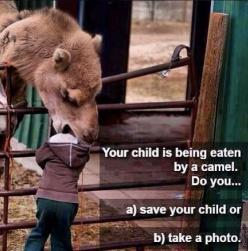 B) Take A Photo Because it's the most common thing to do...: Funny Animals, Common Thing, Funny Animal Pics, Camera, Camels, Funny Parentingfail, Photo, Things To Do
