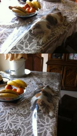 Cat, What are You Doing?: Cats, Animals, Cat Thing, Funny Cat, Pet, Crazy Cat, Humor, Cat Lady