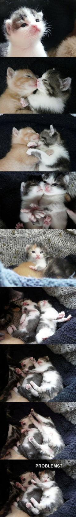 Cute Overload. they remind me of my kitties when they were little especially the black and white one: Kitty Cats, Kitty Kitty, Adorable, Kittens Cats, Baby Kitty, Box Pies, Animal