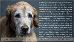 Dog - Golden Retriever - Senior Dog - Poem - Photography: Animals, Dogs Poem, Golden Retrievers, Old Dogs, Pets, Dog Poem, Puppy, Senior Dogs, Friend