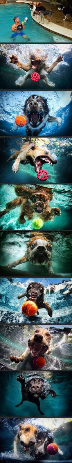 Dogs   ball   underwater camera = Awesome: Underwater Camera, Funny Pictures, Pet, Dogs Underwater, Ball Underwater, Underwater Dog, Animal, Dogs Ball