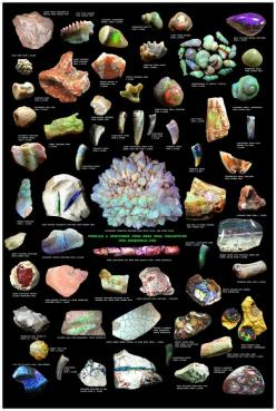 EIGHT STUNNING OPAL POSTERS FOR COLLECTORS/RETAILERS: Opal Poster, Opalized Fossils, I Luv Opals, Opalised Fossils, Amazing Opals, Fossils Poster, Rare Opal, Opal Fossils, Opal Auctions