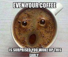 Even You Coffee Is Amazed That You Are Awake This Early – Funny Animal Pictures With Captions – Very Funny Cats – Cute Kitty Cat – Wild Animals – Dogs If you think my coffee is surprised, you should see my face!
