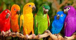 exotic birds of color   ...........click here to find out more     http://guy.googydog.com/p: Colour, Animals, Colorful, Parrots, Colors, Rainbows, Beautiful Birds, Photo