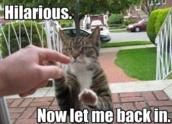 Funny Animal Pictures with Captions | Cute Animals With Captions : theBERRY: Funny Animals, Funny Cats, Funny Stuff, Humor, Funnies, Hilarious, Kitty