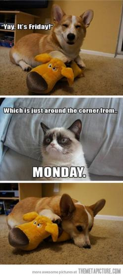 Grumpy cat ruins your Friday… HAHA! this was my attitude today. Right, Spring-loving friends?: Cats, Cat Ruins, Corgi, Funny, Even Grumpycat, Grumpy Cat, Friday, Animal