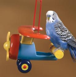 hehe this is why I wanted to name my budgie Admiral Richard E. Byrd :): Darling Budgies, Budgies Parrots, Budgies Bird, Budgie Budgies, Budgies Blue, Pet Birdie, Budgies Parakeet