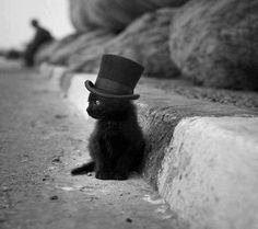 I absolutely love completely black cats they're so adorable. I don't see how anyone could hate them or be mean to them because of a superstition: Animals, Cupcake, Tops, Black Cats, Top Hats, Kittens, Kitty, Blackcat