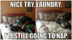 I do this all the time: Giggle, My Life, Nice, Funny Stuff, Funnies, Humor, Day, Laundry