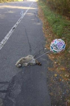 I just died!: Giggle, Funny Stuff, Humor, Funnies, Get Well Soon, So Funny, Animal