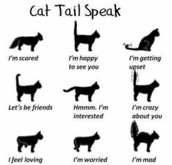 """Kitty Speak. We call that last one """"Christmas tree tail"""" lol: Cats, Animals, Cat Tails, Pets, Crazy Cat, Kitty, Tail Speak, Cat Lady"""