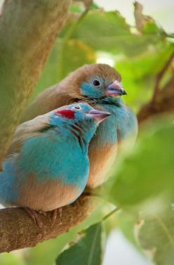 Love birds.: Colorful Birds, Birds Birds, Awww Lovebirds, Birds Butterflies, Awww Cuddle, Beautiful Birds, Animals Birds