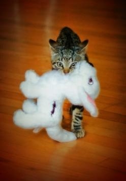 """❁❁❁ **<>**✮✮ =^..^=Thanks, Pinterest Pinners, for stopping by, viewing, re-pinning, & following my boards.  Have a beautiful day! ^..^ and """"Feel free to share on Pinterest ^..^   #catsandme #cats #doghealthcareblog: Kitty Cats, Animals, Funny Ca"""