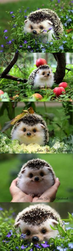 Meet #Darcy, The #Hedgehog Which Is So Cute That You Will Instantly Love It: Face, Hedge Hog, Animals, Happiest Hedgehog, Cutest Pet, Happy Hedgehog, So Happy, Hedgehogs