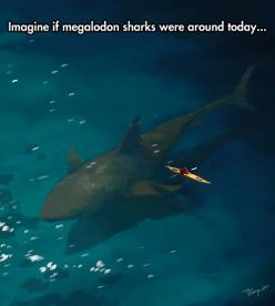 Megalodon Sharks: The Ocean Nightmare: Megalodon Sharks, Animals, Megladon Shark, The Ocean, Ocean Nightmare, Nightmare Funny, Alive Today, Sharks And, Sharks Megalodon