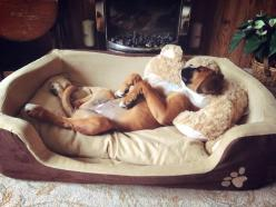 """No dog does """"relaxed"""" like a Boxer!: Animals, Boxer Dogs, Boxers Dogs, Dogs Boxers, Puppy, Boxerdog, Boxers ️"""