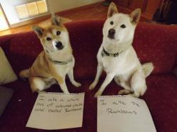 None of these ofeenses specifically, (whew!), but I may have to start my own dog shaming website for out three dogs: Animals, Dog Shaming, Rainbows, Funny Stuff, Funnies, Humor, Pet Shaming