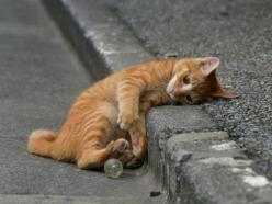 Playing all by myself....IT'S SO EXHAUSTING THINKING UP FUN STUFF TO DO......GUESS I'LL JUST TAKE A LITTLE CAT NAP TO RECOUP MY ENERGY........ccp: Cats, Animals, Kitty Cat, Pets, Play, Kittens, Dog