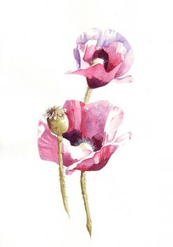 poppy by louise de masi on etsy: Watercolor Poppies, Watercolor, Art Watercolors, Watercolors Poppies, Poppies Watercolor, Poppy Watercolor, Watercolour Poppies