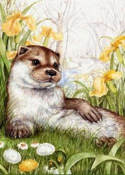 Pretty River Otter drawing.: Animation Art Animals, Belles Images, Animal Artists, Animals Art, Various Images, Cook Kaseybellefox, Debbie Cook Art, ️Artist Debbie