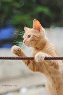 Pssst..did you see the big in dressed in red?: Tabby Cat, Cutiepie Angels, Walk