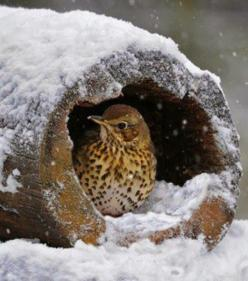 Taking Shelter: Animals, Nature, Shelters, Snow, Winter Wonderland, Owl, Photo, Birds
