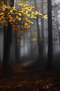 The fog and lighting enhance the depth of the path. I love the inclusion of the branch in the light to give perspective.: Picture, Photos, Forests, Misty Forest, Post, Nature, Wood, Trees, Kristjan Rems