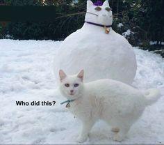The unamused cat: | 28 Pictures That Will Make You Laugh Every Time: Cat Pictures Funny, Funny Fat Cat, Funny Cat, Funny Pictures Cats, Crazy Cat, Funny Animal, Cat Funny Pictures, White Cat, Funny Kitty Cats