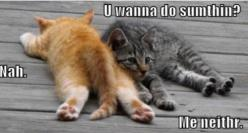 this is us right now... @Katie Martin: Funny Animals, Funny Cats, Lazy Cats, Sunday, Funnies, Humor, Things, Smile, Kitty