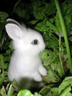 This picture is so adorable I think it gave me diabetes.: Rabbit, Cuteness, Pets, Baby Bunnies, Adorable, Box, Baby Animals