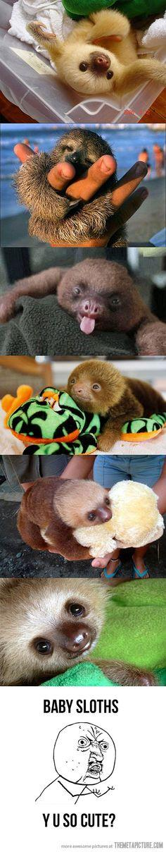 Three-toed Sloths..amazing animals!: Silly Sloths, Critters, Animals, Nature, Sloths ️, Baby Sloths, Three Toed Sloths, Photo