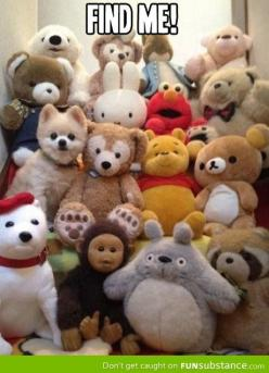 Try to find me: Funny Animals, Dogs, Pet, Puppy, Pomeranian