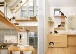 Unbelievable Cat-friendly House Design from Japan.   This is awesome!  Chewy's bags are packed and he's searching for cheap airfare.: Interior Design, Crazy Cats, Cat Furniture, Idea, Pets, Cat Houses, Cat Stuff, Crazy Cat Lady, Animal