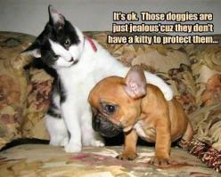 View All - Funny Animal Pictures With Captions - Very Funny Cats - Cute Kitty Cat - Wild Animals - Dogs (fun,funny,humor,jokes): Cats, Funny Animals, Picture, Dogs, Funny Stuff, Humor, Funnies, Kitty