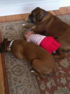 We sleep next to you because we love you little human. This is Cooter Brown and Bailey An with our Brenton! They watch over him as he sleeps or plays in the floor ((:: Animals, Bodyguards Boxer, Boxer Dogs, Pet, Boxers, Kids, Baby, Day, Friend