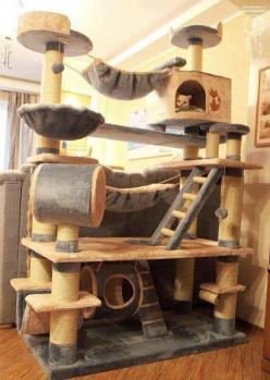 We would have so much fun playin on this, yes I would play on it too lol this is literally the best thing ever invented for cats to play with!!!!!!!: Cats, Animals, Pets, Crazy Cat, Cat Trees, Cat House, Kitty, Cat Lady