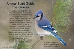 You are being reminded that to wear the crown of true mastership requires dedication, responsibility, and committed development in all things physical as well as the spiritual. -Jay: Spirit Animal, Animal Spirit Guides, Blue Jays, Animal Totems, Bluejay S
