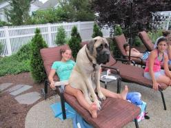 21 Dogs Who Don't Realize How Big They Are: 21 Dogs, Animals, Don T Realize, Pets, Lap Dogs, Funny, Puppy, Dr. Who, Big Dogs