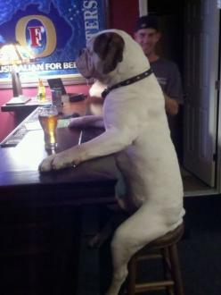"""32 Pictures You Need to See Before You Die"". (Dog at a bar is my favorite.): Animals, Dogs, Beer, Pet, Funny Stuff, Bar, Friend"