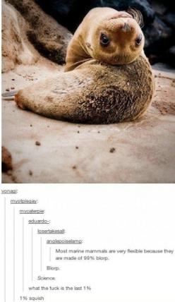 """""""Daaaddd, what are mammals made of?"""" """"Well dear, most of them are 99% Blurp"""" """"WOW, really?? But what about the other 1%??"""" """"Pure Squish, dear. Pure Squish"""": Funny Texts, Funny Text Posts, Best Of Tumblr Funny Comments, Ador"""