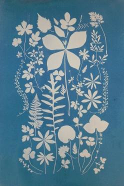 """"""" I often worry about the growth of power among the wealthy in this country """": Floral Stencil, Graphic, Blue, Art, Botanical, Flower Silhouette, Design"""