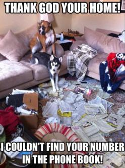 """Thank God you're Home!  We couldn't find your number in the phone book!"" ~ Dog Shaming shame - Boxer & Husky - we've been trying to call you for hours - Honest :): Funny Animals, Thank God, Dogs, Boxer, Pet, Funny Stuff, Humor, Nu"