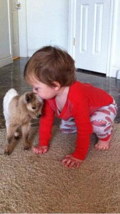 """You can stand yourself back up,"" the tiny goat said to the baby, ""but I'm just going to head butt you and knock you down again."": Tiny Animal, Dzieci Children, Animals Wow, Baby Goat, Toddler, Boy, Kid"