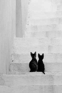 'The vision must be followed by the venture. It is not enough to stare up the steps - we must step up the stairs.' - Vance Havner. °: Animals, Black Cats, Black White, Chat, Black Kittens, Kitty, Friend, Photography, Blackcat