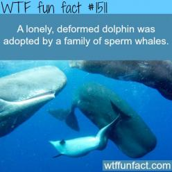 A dolphin gets adopted by whales  WTF FUN FACTS HOME  /  See MORE TAGGED/ Animals FACTS (source): Wtf Fun Fact, Wtffacts, Floor, Wtffunfacts, Sad Sweet Inspirational, Sweet Whales