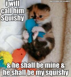 And so long as I keep my squishy I am a happy, happy girl.: Cats, Animals, Stuff, Kittens, Baby, Funny Animal, Funny Cat Quote, Finding Nemo Meme, Kitty
