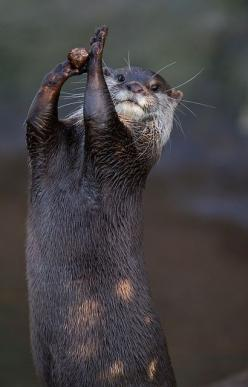 And the otters call a time out!: Otter Nonsense, Wild Animals, Time Out, Score, Creatures, Otters Call